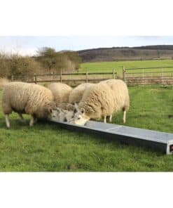 Bateman Standard Sheep Trough - Image