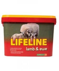 Lifeline Lamb & Ewe Bucket - Image