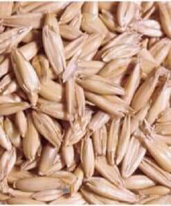 Rolled Oats - Image