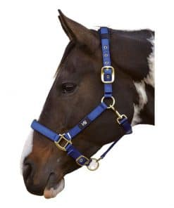 HY Deluxe Padded Head Collar - BRIGHT BLUE
