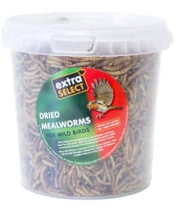 Extra Select Mealworms - Image