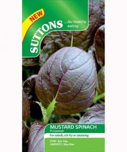 Spinach Seeds - F1 Comred - Image
