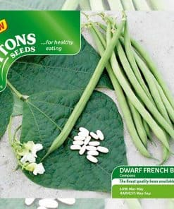Suttons Bean (Dwarf French) Seeds - Compass - Image