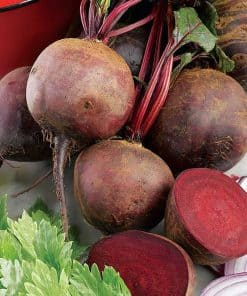 Suttons Beetroot Boltardy - Image